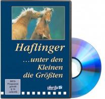 DVD Haflinger...... unter den Kleinen die Größten