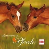 Liebenswerte Pferde - wahre Meisterwerke der Natur