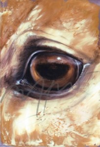 Kunstpostkarte Pferdeauge Thomas Aeffner