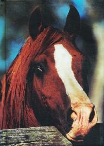 Blanko Buch - Notizbuch Pferde - ohne Linien - Format A6