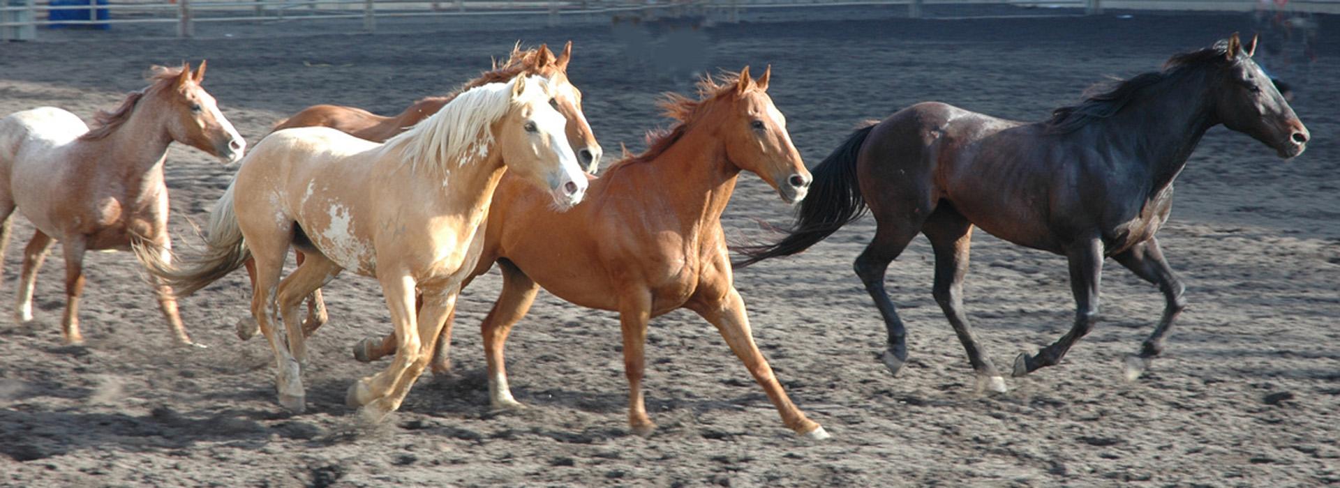 Rund um Pferd und Reiter