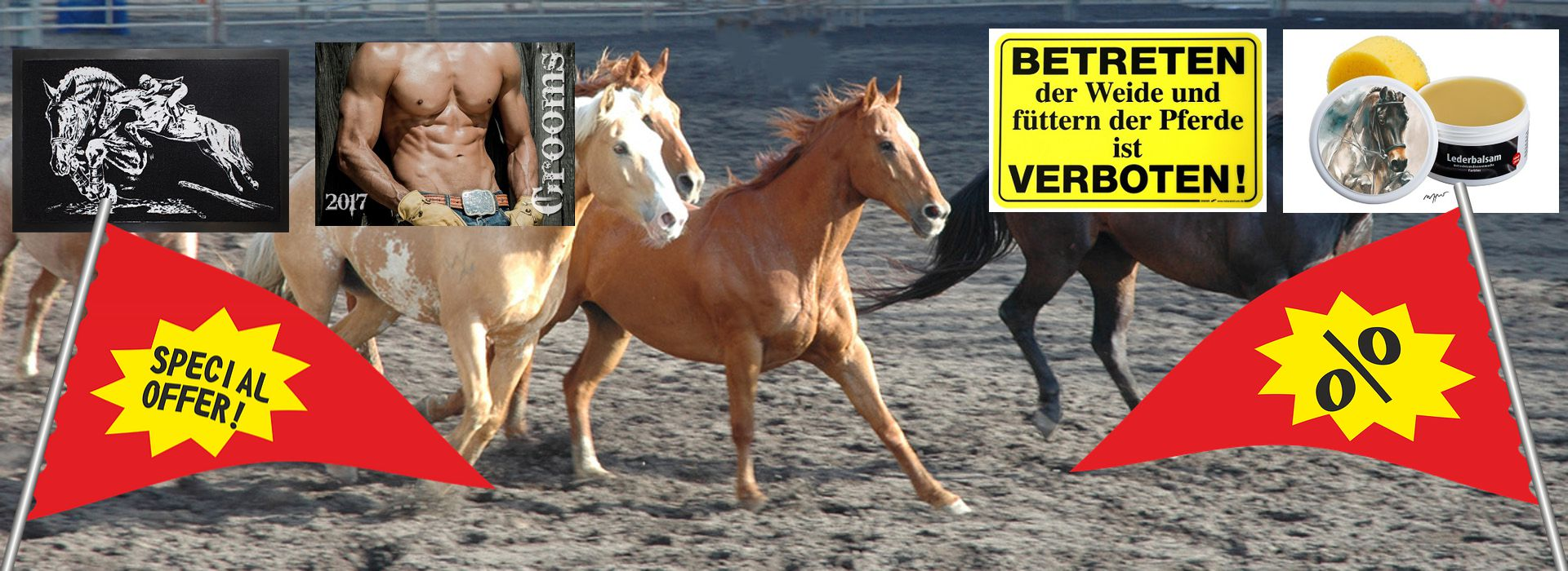 Rund um Pferd & Reiter